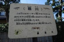 20070204-ougikawa.s065.jpg