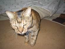 20070415-lala.s.IMG_4314.JPG